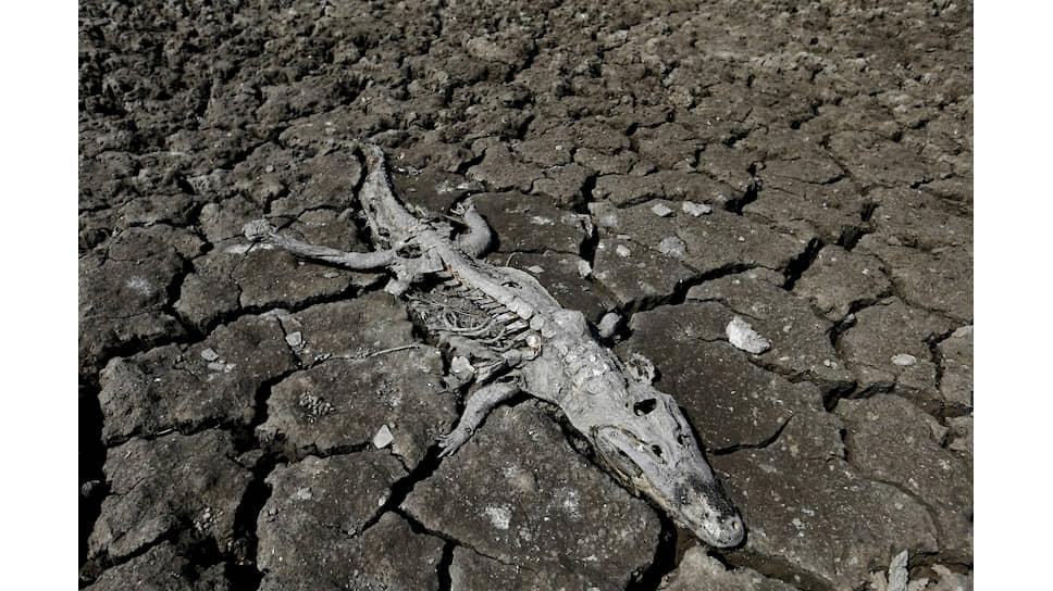 Во время засухи в Парагвае