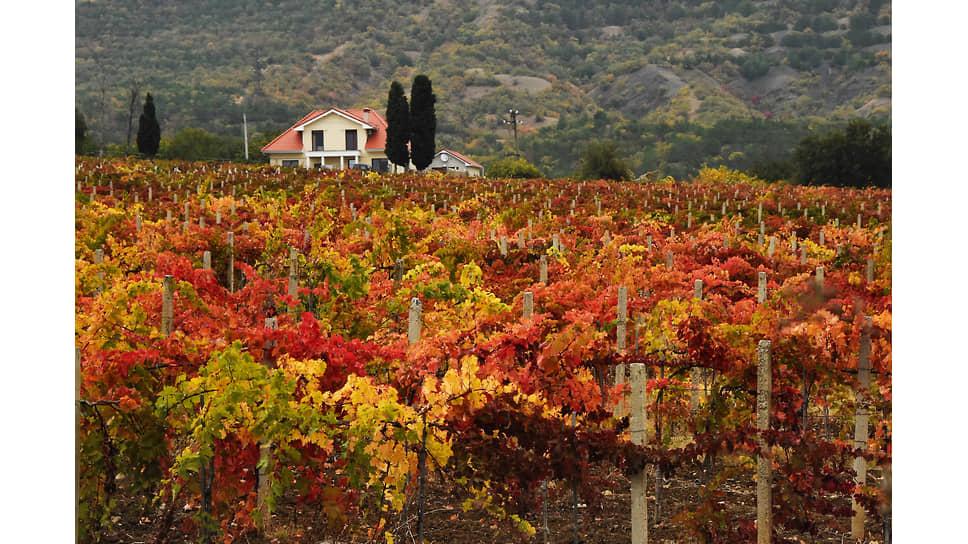 Виноградари и владельцы садов в нынешнем году оценили страхование