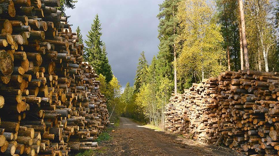 """""""Стратегия-2030"""" предполагает, что лесозаготовка вырастет в 1,5 раза, производство пиломатериалов — в 2,3 раза"""