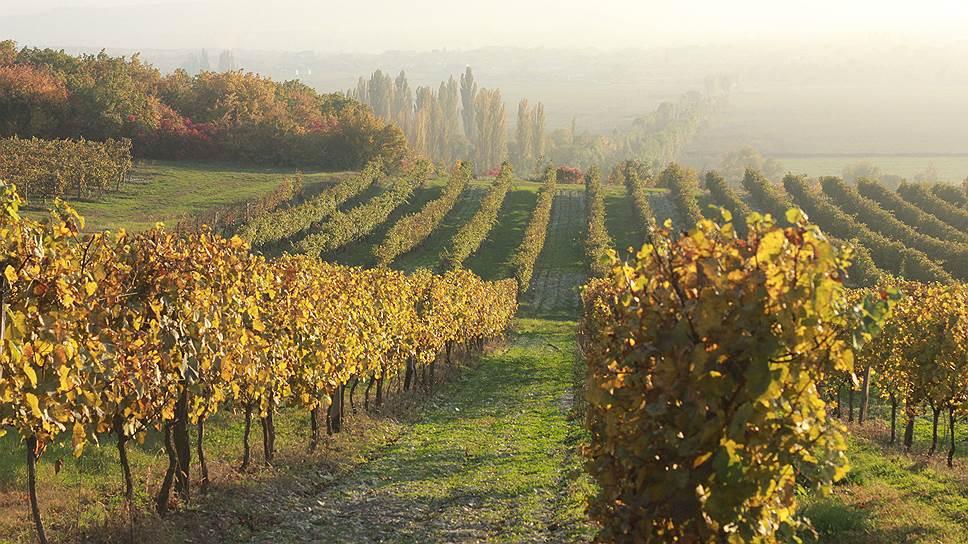Виноградники виноделов Бюрнье