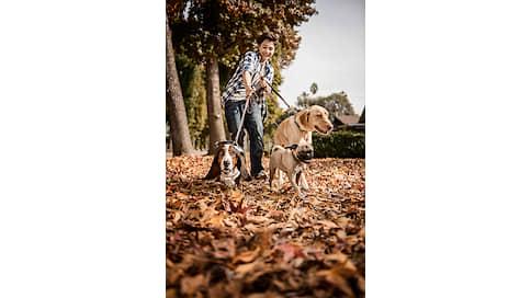 Пушистый сервис  / Какие услуги появляются вокруг домашних животных
