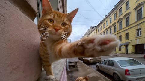 В естественной среде  / Как живется домашним животным в российских городах