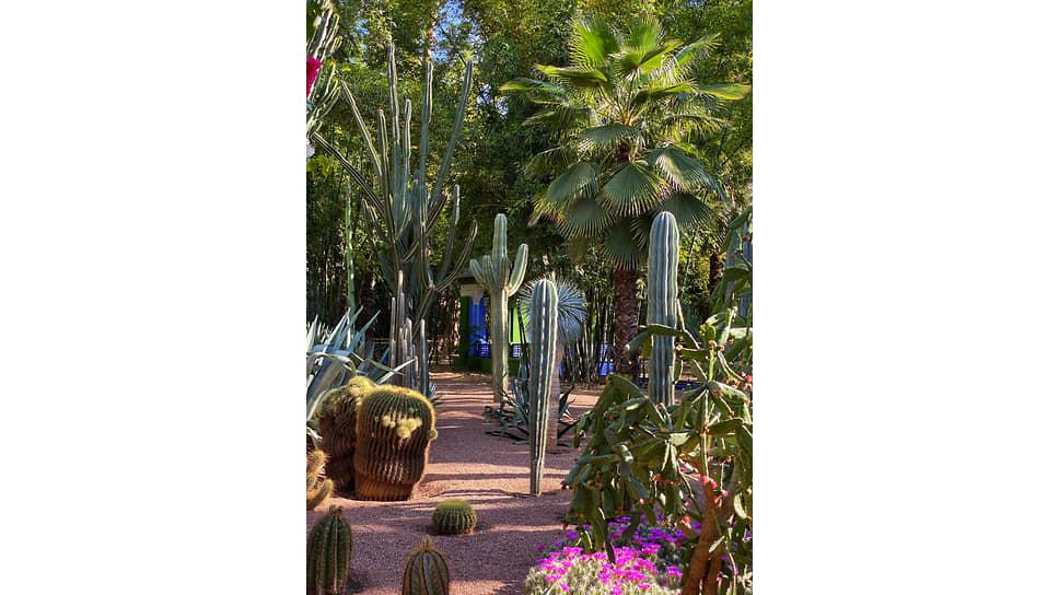 Сад кактусов, к которому приложили руку Ив Сен-Лоран и Пьер Берже