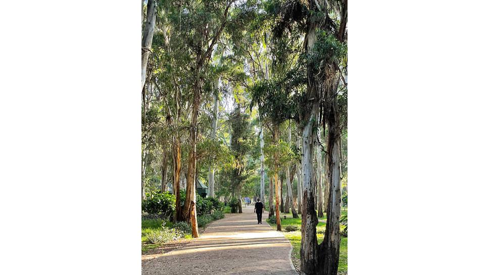 Рабат отличается большим количеством ухоженных и зеленых парков