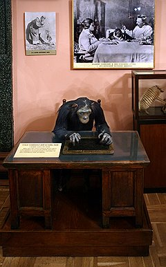 Музей «Уголок дедушки Дурова»