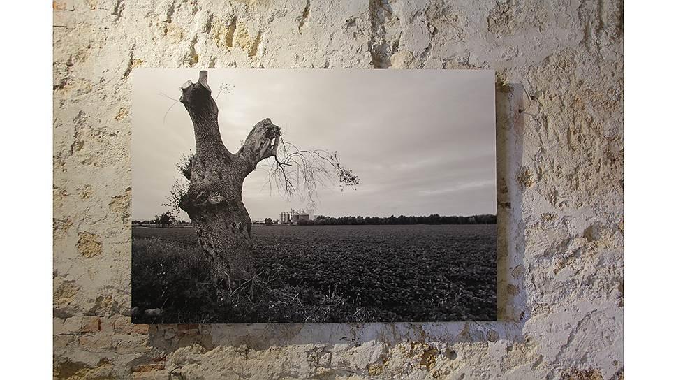 Уриэль Орлов. «Деревья желаний»