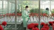 Кино-ГМО  / Ксения Рождественская о «Малыше Джо»