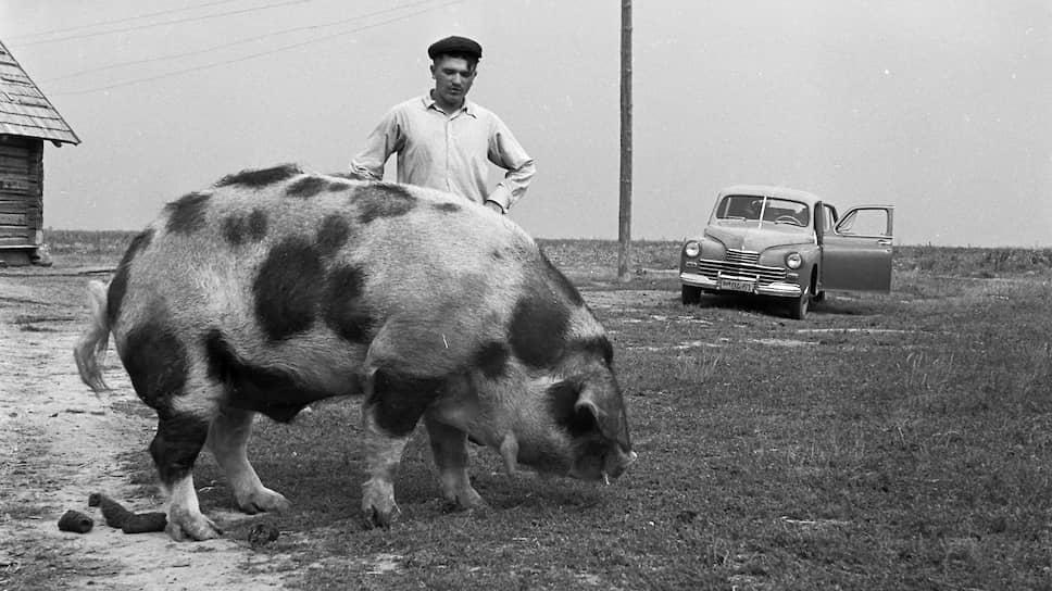 Колхоз «Память Ильича». Белорусская ССР, 1955
