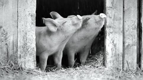 Свинотворение  / Ксения Рождественская о «Гунде», документальном блокбастере о свинье