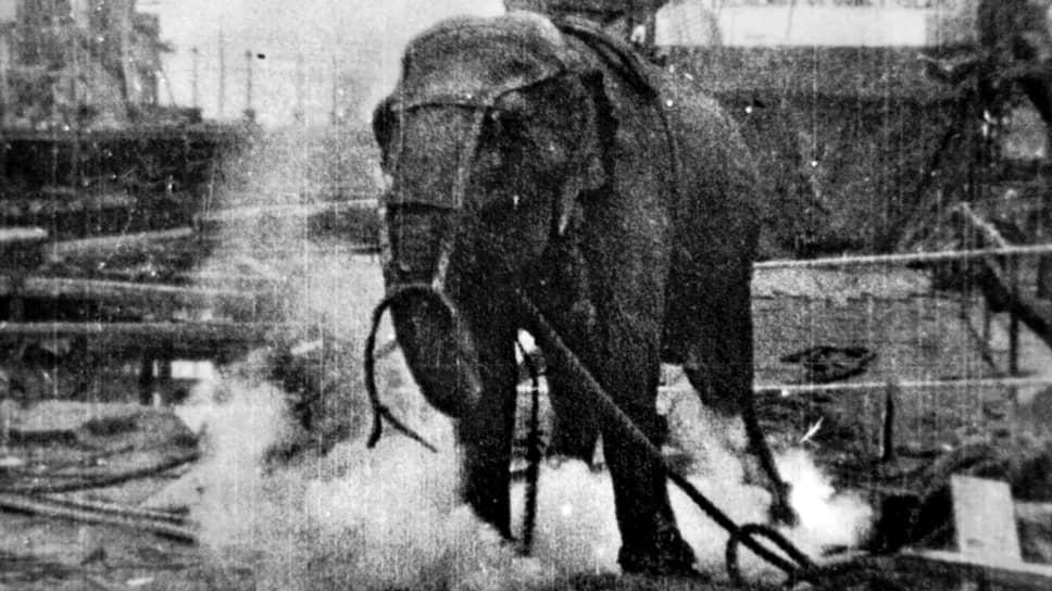 «Убийства слона». Режиссер Эдвин Поттер, 1903