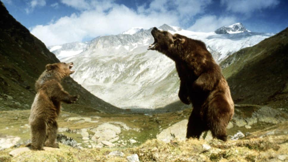«Медведь». Режиссер Жан-Жак Анно, 1988