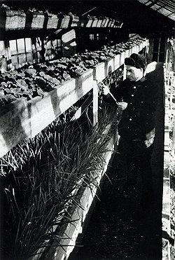 По указам 1948 года за владение теплицей можно было отправиться в места с весьма прохладным климатом