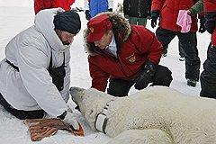 Премьер-министр Владимир Путин во время экспедиции в Арктику.  Земля Франца-Иосифа, 2010 год