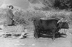 С точки зрения доступности даже самых примитивных сельхозорудий и средств передвижения Осетия занимала последнее место на Кавказе