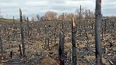 Самая распространенная причина природных пожаров в России — палы сухой травы. В этом году астраханское МЧС впервые сообщило о «возгораниях сухой растительности» 27 февраля, когда еще снег не везде сошел