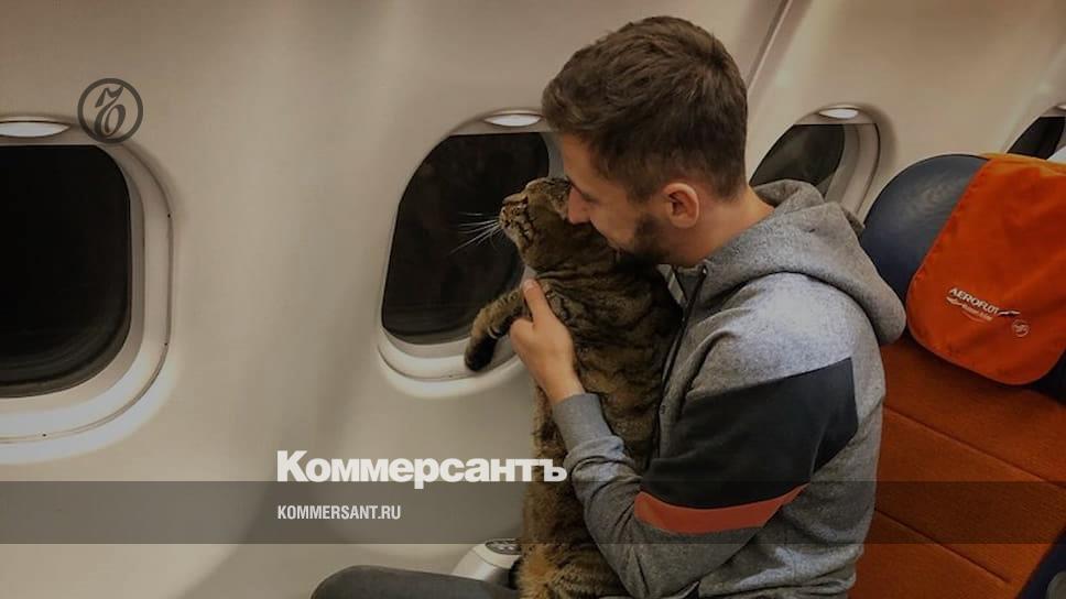 «Аэрофлот» лишил пассажира бонусных миль за провоз толстого кота