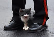 Ноябрь. Москва. Мокрый котенок между ботинок учащегося Суворовского училища