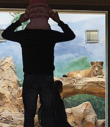 Cheetahs were brought to the Kazan Zambezi River Zoo.