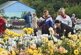 A ball of chrysanthemums at the Nikitsky Botanical Garden amid the spread of the coronavirus COVID-19.